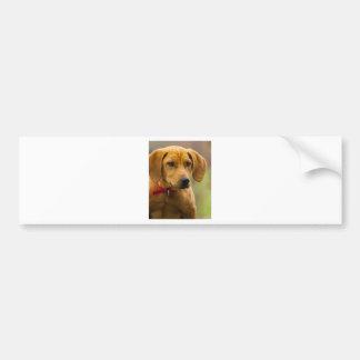 Perrito del perro de caza del Coon de Redbone Pegatina Para Coche