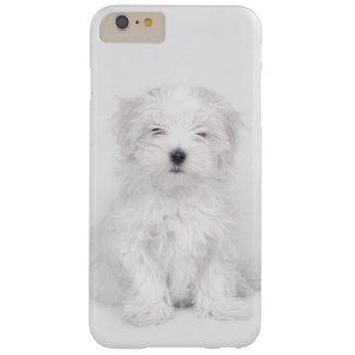 Perrito del perro maltés funda barely there iPhone 6 plus