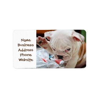 Perrito inglés del dogo del saludo lindo etiquetas de dirección