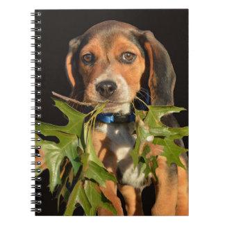 Perrito juguetón del beagle con las hojas libreta