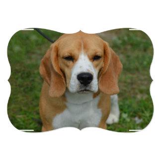 Perrito realmente lindo del beagle invitación 12,7 x 17,8 cm