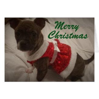 Perrito rojo del vestido tarjeta de felicitación