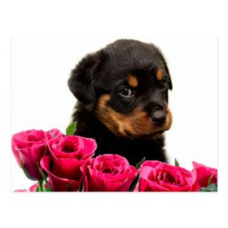 Perrito subió tarjeta del día de San Valentín de Postal