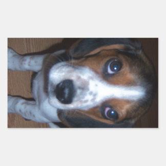 Perrito tonto del beagle de Randy del perro Pegatina Rectangular