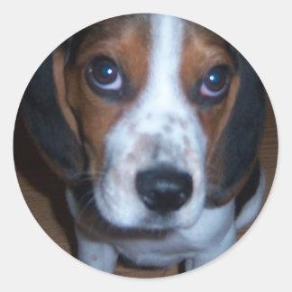 Perrito tonto del beagle de Randy del perro Pegatina Redonda