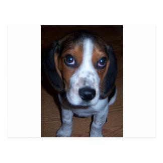 Perrito tonto del beagle de Randy del perro Postal