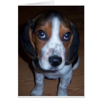 Perrito tonto del beagle de Randy del perro Tarjeta De Felicitación