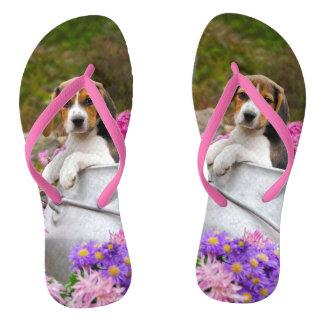 Perrito tricolor lindo del perro del beagle en una chanclas