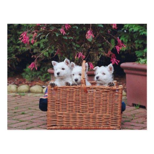 Perritos adorables postal