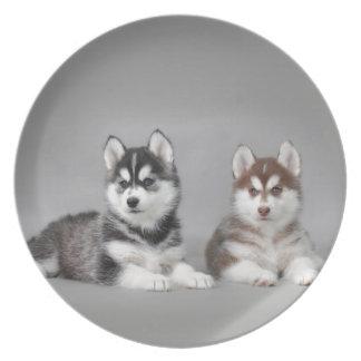 Perritos del husky siberiano platos para fiestas