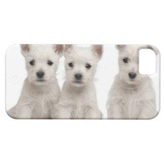 Perritos del oeste de Terrier de la montaña (7 Funda Para iPhone SE/5/5s