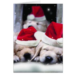 Perritos lindos de Labrador con los gorras de Tarjeta De Felicitación
