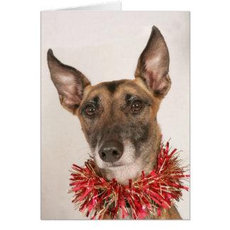 Tarjetas de Navidad de perros