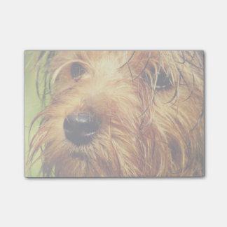 Perro adorable de Terrier con una cara mojada Notas Post-it®