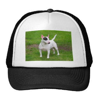 Perro americano de Terrier de pitbull Gorra