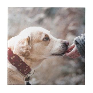 perro azulejo de cerámica