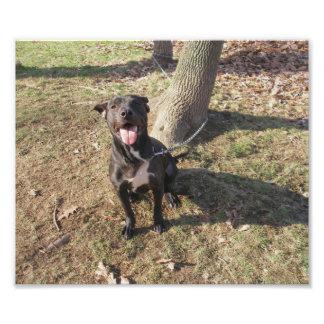 Perro blanco y negro amistoso que se sienta afuera fotos