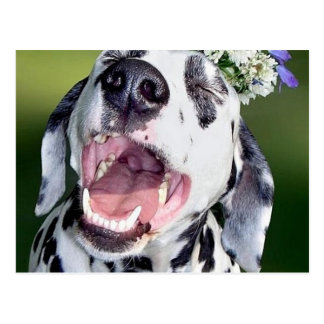 Perro dálmata sonriente postal