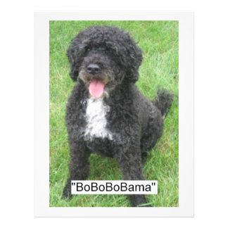 Perro de agua portugués de Barack Obama Folleto 21,6 X 28 Cm