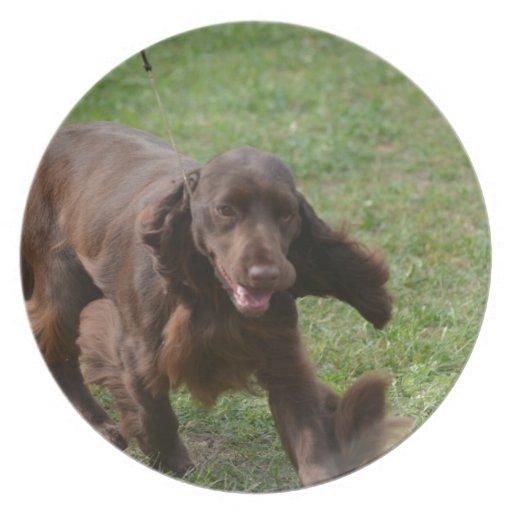 Perro de aguas de campo lindo plato de comida