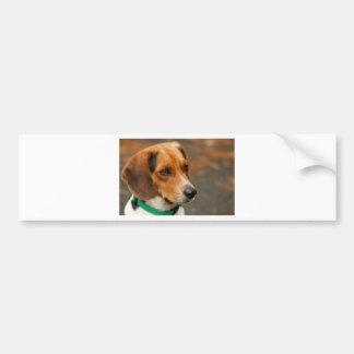 Perro de caza enfocado inteligente del beagle pegatina para coche