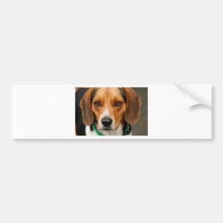 Perro de caza hermoso elegante del beagle etiqueta de parachoque