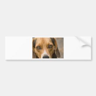 Perro de caza leal del perro del beagle etiqueta de parachoque