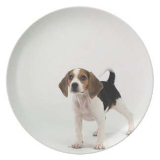Perro de caza plato de cena