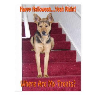 Perro de Halloween y ningunas invitaciones