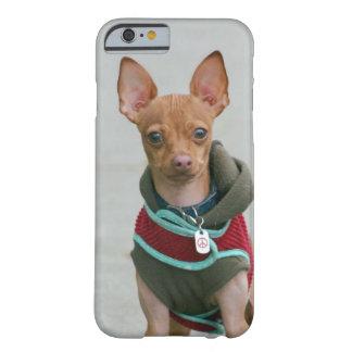 Perro de la chihuahua funda para iPhone 6 barely there