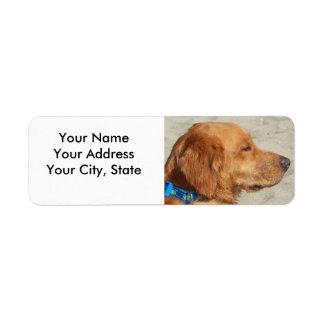 Perro de la playa del golden retriever etiqueta de remitente