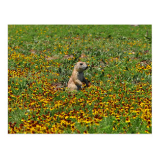 Perro de las praderas en flores postal