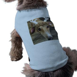 Perro de los ciervos - perro lindo - whippet