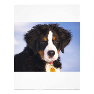 Perro de montaña de Bernese - foto linda del perri Folleto 21,6 X 28 Cm