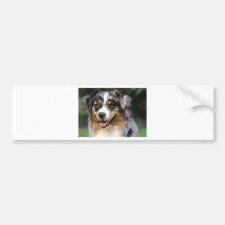 Perro de pastor australiano pegatina para coche