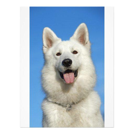 Perro de pastor suizo tarjeta publicitaria
