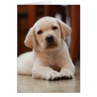Perro de perrito amarillo de Labrador del bebé que Tarjeta De Felicitación