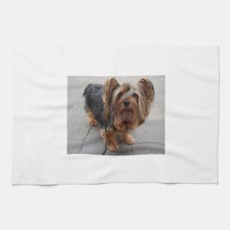 Perro de perrito australiano de Terrier sedoso Paño De Cocina