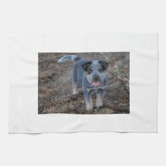 Perro de perrito australiano del ganado paño de cocina