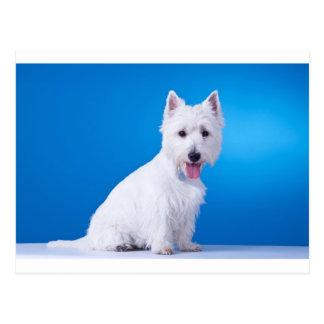 Perro de perrito blanco de la montaña del oeste postal