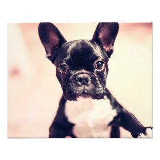 Perro de perrito curioso y lindo fotografía