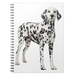 Perro de perrito dálmata del amor - perro manchado libreta espiral