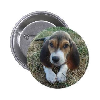 Perro de perrito de Artésien Normand del Chapa Redonda De 5 Cm