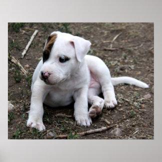 Perro de perrito de PItbull Terrier del americano Póster