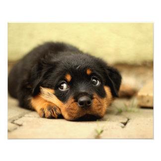 Perro de perrito de Rottweiler curioso sobre vida Impresiones Fotograficas