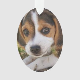 Perro de perrito del beagle