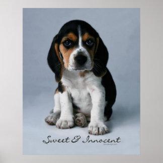 Perro de perrito del beagle póster