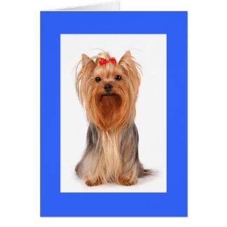 Perro de perrito en blanco de Yorkshire Terrier Tarjeta