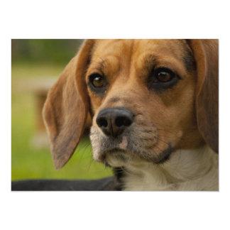 Perro de perrito lindo del beagle invitación 13,9 x 19,0 cm