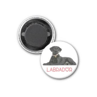 Perro de perrito negro del labrador retriever del imán